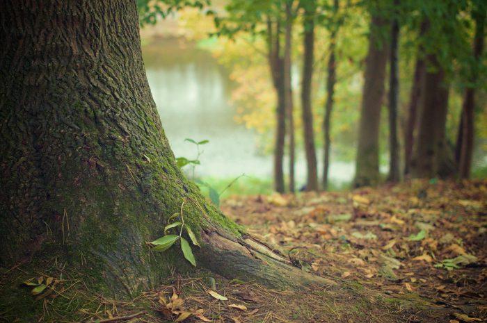 tree-trunk-569275_1920